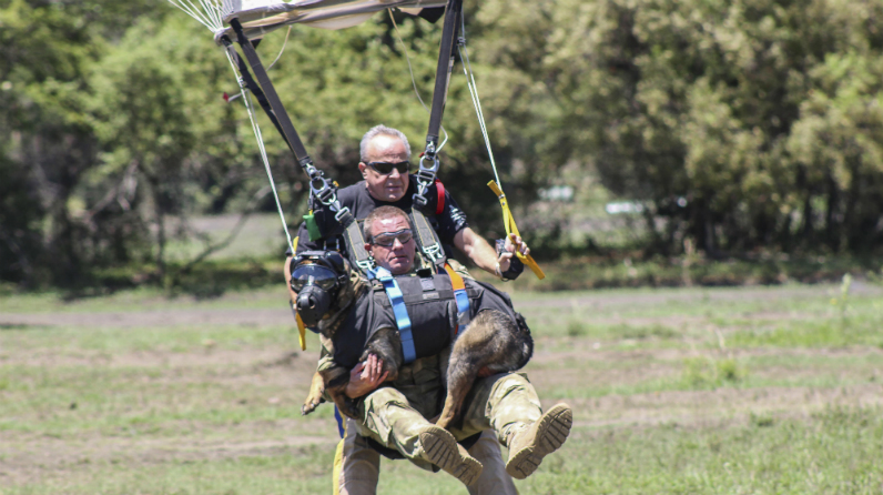 First skydiving anti poaching dog 7
