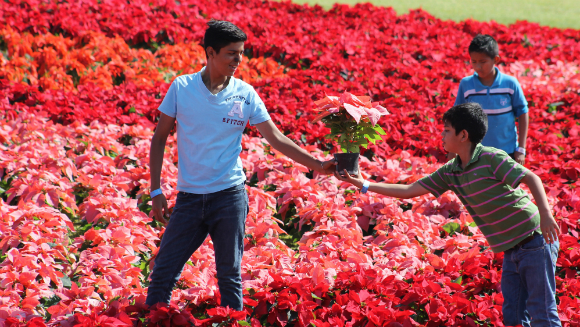 Largest carpet of flowers3