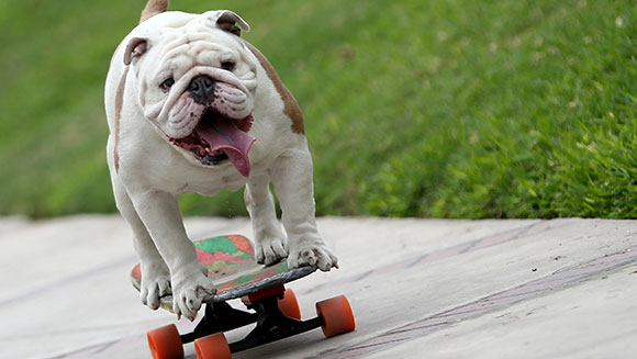 longest-human-tunnel-travelled-through-by-a-skateboarding-dog-header